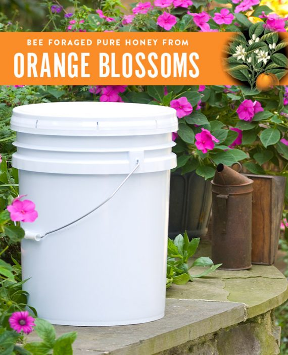 Orange Blossom Honey Pail