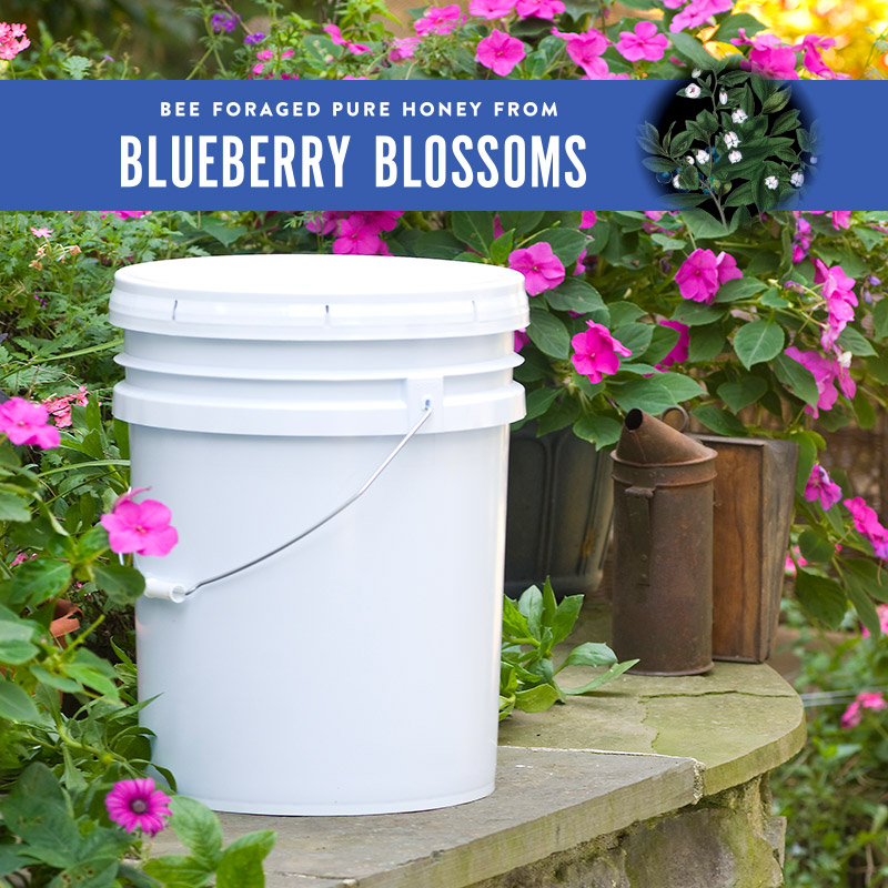 Blueberry Honey Pail