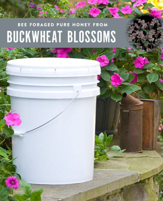 Buckwheat Honey Pail