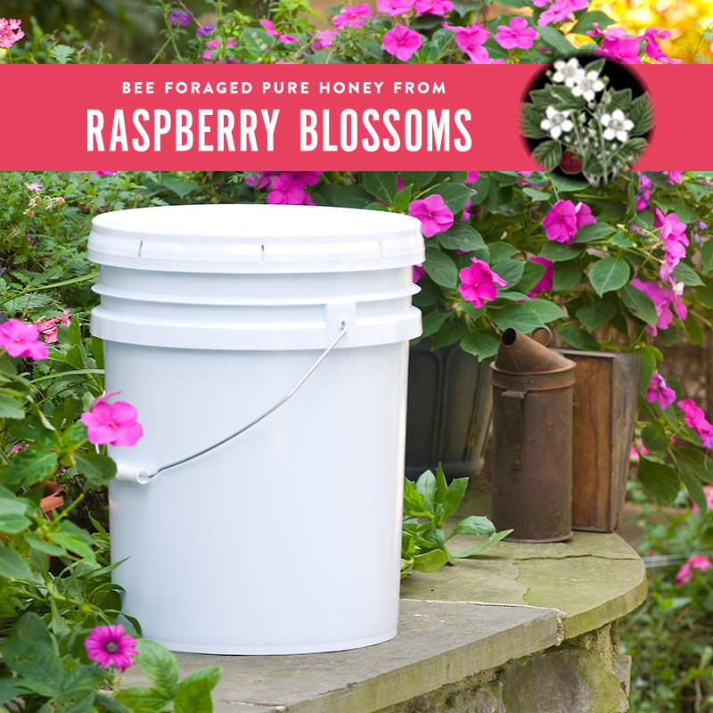 raspberry-honey-pail.jpg